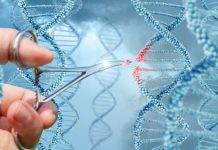 гените