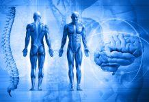 човешко тяло